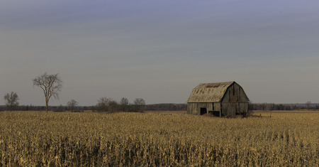 Old barn in a corn field photo