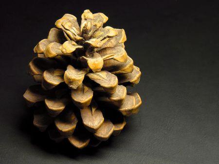 progeny: Cone Stock Photo