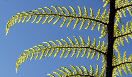 Detailed view of fern fronds from the New Zealand forests