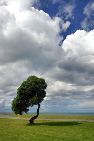 Lonesome tree at the South Pacific coast in Napier, New Zealand
