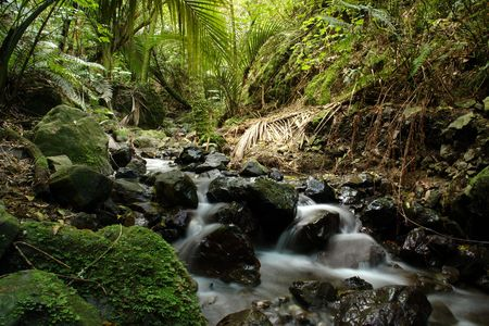 Long-exposure picture of a flowring stream in a lowland forest of New Zealand