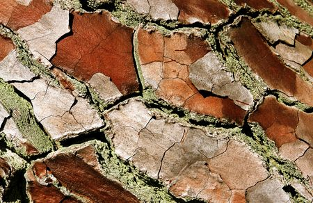 Close-up of a bark in the primeval forests of New Zealand