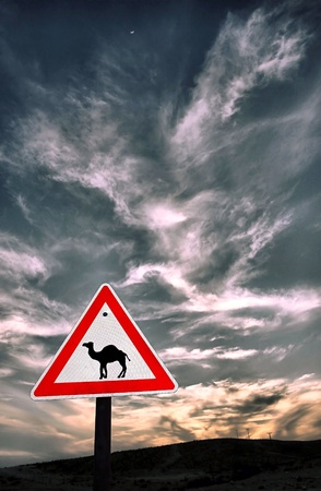 Beware of camels! Stock Photo