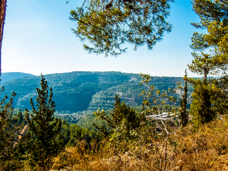 Nature and plants around the countryside of Jerusalem