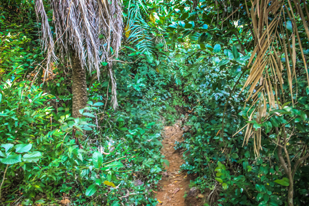 Path in the jungle of Karnataka in southern India