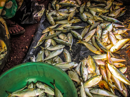 Closeup of different types of fishes in the fish market in southern India