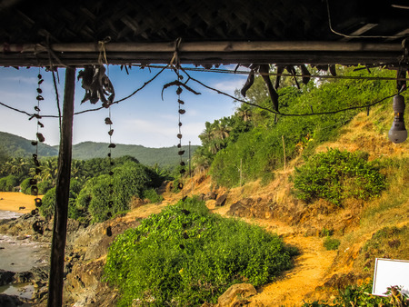 Jungle view from the windows in southern India