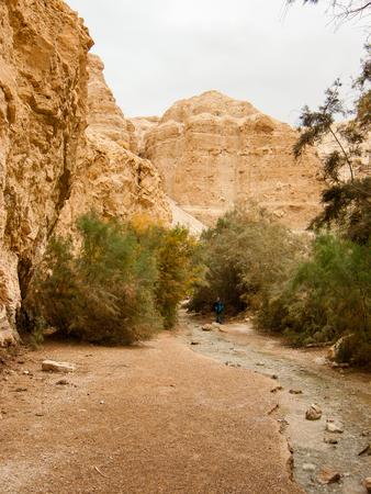 Nature in the Wadi Bokek reserve of Judean desert in Israel