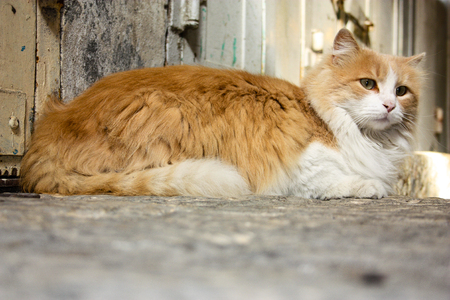 Cat roaming the streets of the city of Jerusalem in Israel
