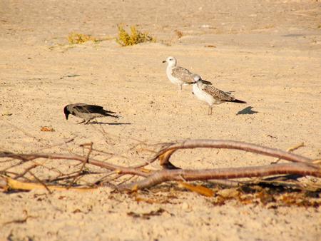 Nature around the sea in Sinai Egypt