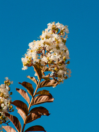 closeup of flowers from Jerusalem in Israel Stock Photo