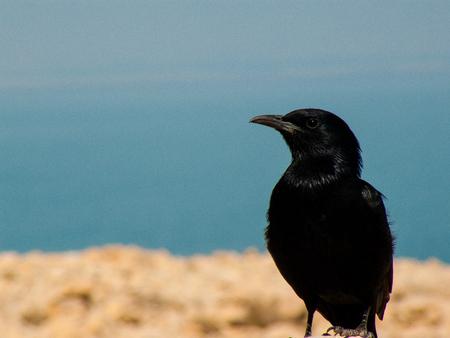 Closeup of birds in the Negev desert Israel