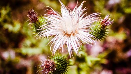 Wild flowers field closeup in France