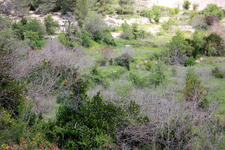 Landscape and nature at the White Valley near Jerusalem, part of the Israeli National Trek Stock Photo