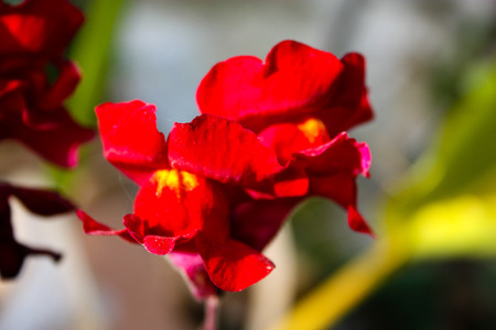 Closeup of colorful flowers from Israel