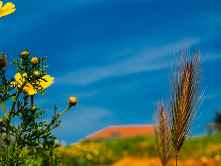 View of the nature  in the countryside of Israel 版權商用圖片