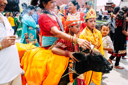Kathmandu Nepal August 27, 2018 View of unknowns Hindu people attending a religious ceremony with a holy cow at the Pashupatinath temple in the morning Editorial