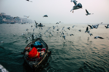 Varanasi India November 14, 2018 View of seabirds eating during the sunrise on the Ganges river