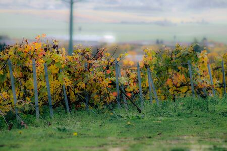 View of the vineyard of Champagne during autumn in the countryside of Reims in France Banque d'images