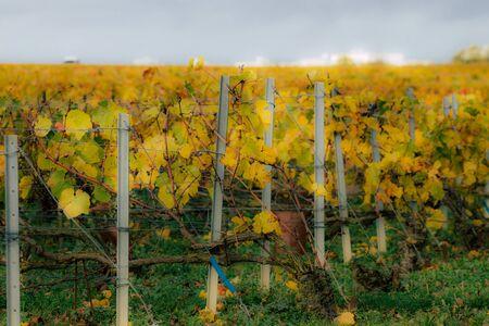 Vue sur le vignoble de Champagne en automne dans la campagne de Reims en France Banque d'images