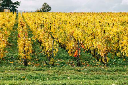 Reims Francia 4 de noviembre de 2019 Vista del viñedo de Taittinger Champagne house durante el otoño en la campiña de Reims por la tarde
