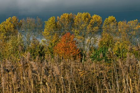View of colorful tree in autumn in France in late afternoon