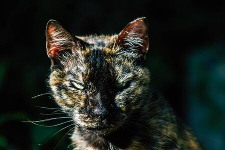 December 30, 2019 View of abandoned domestic cat living in the streets of Tel Aviv in the afternoon