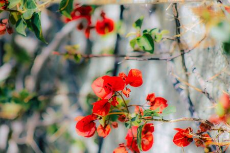 Closeup of various colorful flowers growing on the street in spring Banco de Imagens