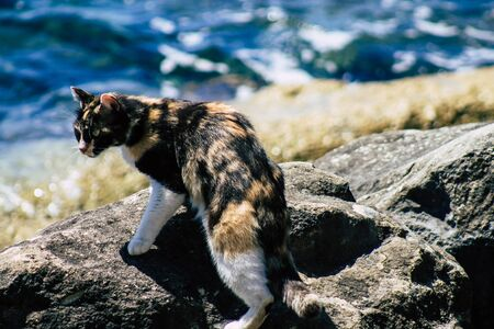 Limassol Cyprus May 10, 2020 View of domestic cat living in the streets of Limassol in Cyprus island 版權商用圖片
