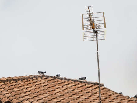 Pigeons walking on the roof of a house in a village that is cut out by a plain gray sky