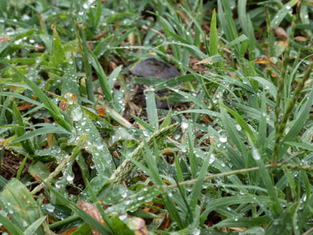 Lawn with morning dew on a cloudy autumn day