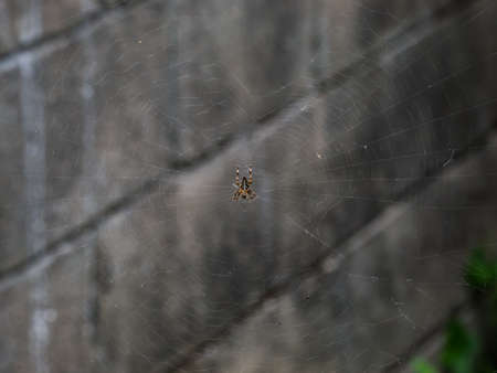Spider in the center of a web on an earthy gray background