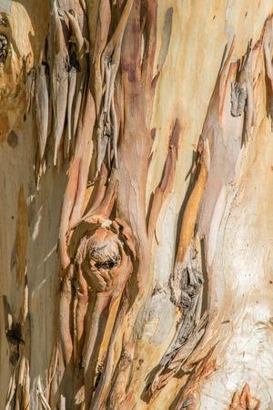 b: a close up photo taken of funky tree bark B Stock Photo