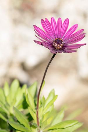 a detailed close up of a purple flower Banque d'images