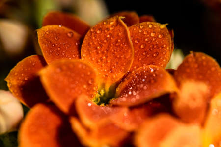 a single orange flower in bloom covered in raindrops after a storm