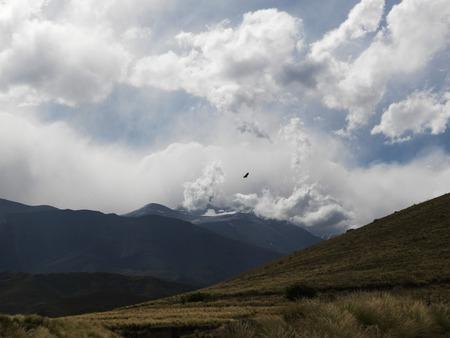 Condor, Mendoza, Argentina, South America