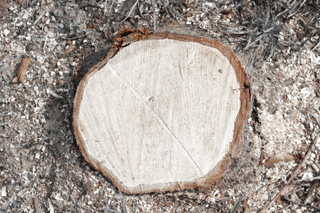 cutted: cutted trunk from the top