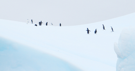 iceberg floating in antarctica with penguins Imagens