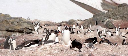 ペンギンは海の海岸で休憩 写真素材