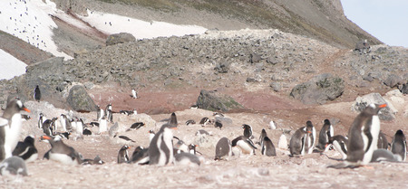Wild penguins resting by the sea coast