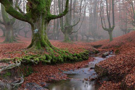 Magical water between beech woods Stock Photo