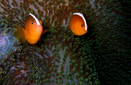 The beauty of underwater world in Sabah, Borneo.