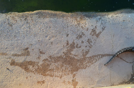 Things are traceable before too long. The photo shows a crocodiles water-mark which remains clear before it dries out.