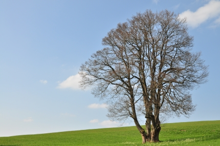 solitary tree Stock Photo - 14007140