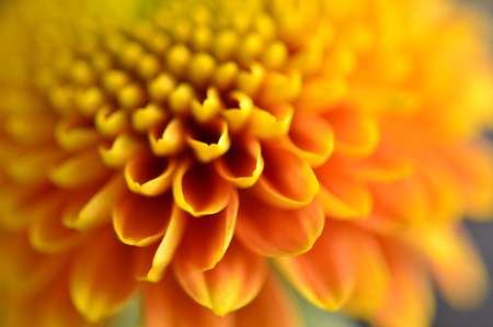 Diffused yellow flower