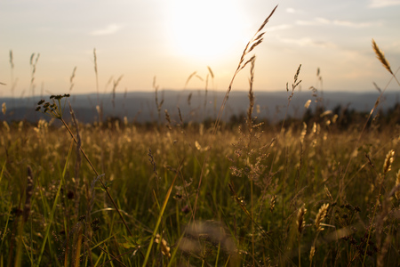 Tall grass in front of sunset Imagens
