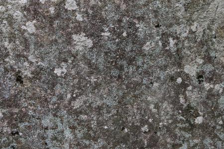 Mossy Stone from the Adirondack region of New York