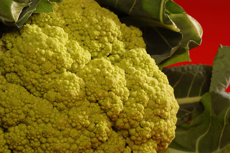 clse: Cauliflower on red background , vegetable