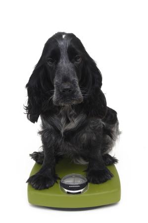 deployed: Cocker, Dog