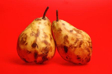 salut: two ripe pears